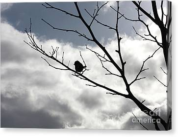 Winter Branches With Bird Canvas Print by Carol Groenen