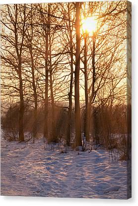 Winter Break Canvas Print by Wim Lanclus