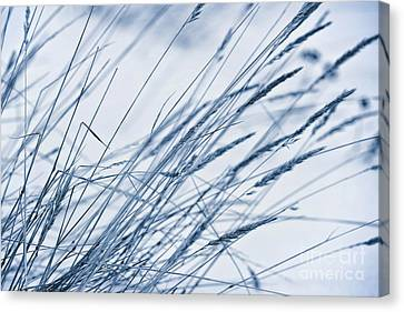 Winter Breeze Canvas Print by Priska Wettstein