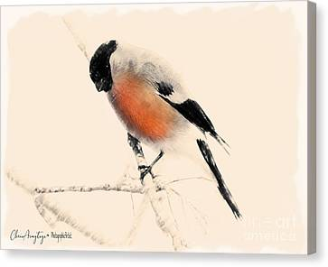 Winter Bullfinch Canvas Print
