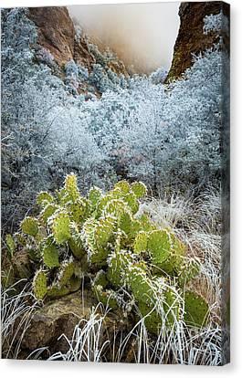 Winter Cacti Canvas Print