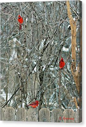 Winter Cardinals Canvas Print by Edward Peterson