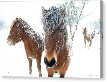 Winter Chills Canvas Print by Robert Lacy