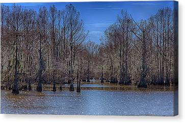Winter Colors Canvas Print by Jim Cook