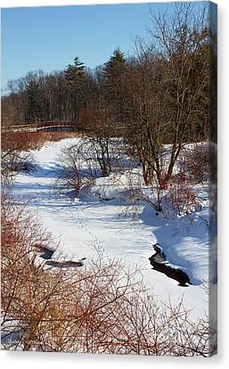 Winter Creek Lined With Red Osea Dogwood Canvas Print by Barbara McMahon
