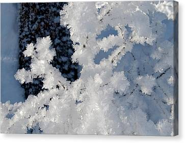 Winter Crystal Canvas Print