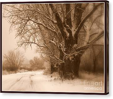 Winter Dream With Framing Canvas Print by Carol Groenen