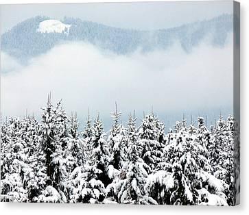 Fir Trees Canvas Print - Winter Dreamworld by Will Borden