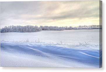 Winter Field Canvas Print by David Wynia