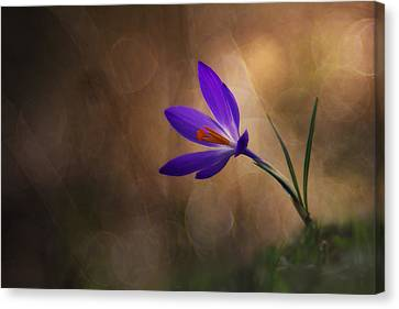 Winter Flower Canvas Print by Edoardo Gobattoni