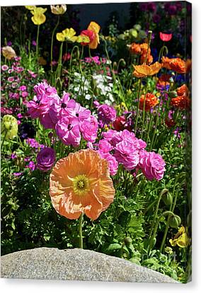 Winter Flowers Canvas Print by Gwyn Newcombe