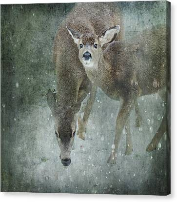 Canvas Print featuring the photograph Winter Foraging by Sally Banfill