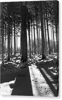 Winter Forest Canvas Print by German School