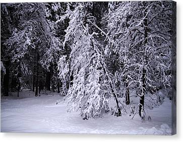Winter Forest Canvas Print by Lee Chon