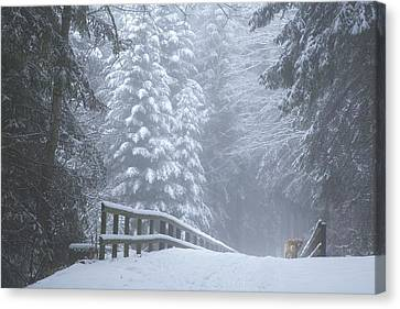 Winter Forest With Golden Retriever Canvas Print