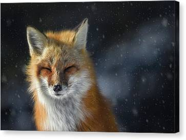 Tracy Munson Canvas Print - Winter Fox by Tracy Munson