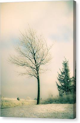 Winter Freeze Canvas Print by Julie Palencia