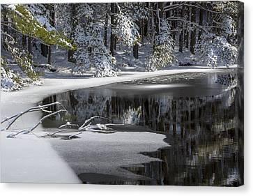 Winter Fresh Canvas Print by Karol Livote