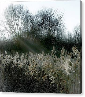 Winter Fringe Canvas Print