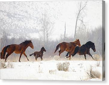 Winter Gallop Canvas Print by Mike  Dawson