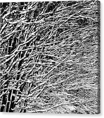 Winter Canvas Print by Gert Lavsen