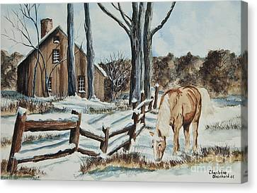 Winter Grazing  Canvas Print by Charlotte Blanchard