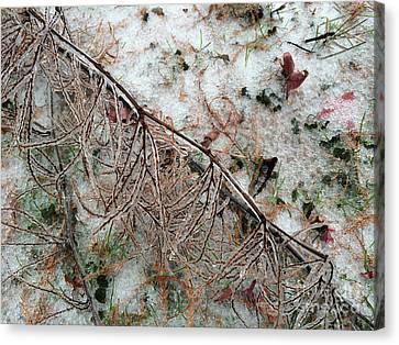 Winter Ground  Canvas Print
