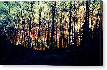 Winter Grove Canvas Print