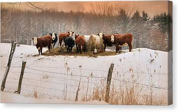 Winter Hay Canvas Print by Lori Deiter