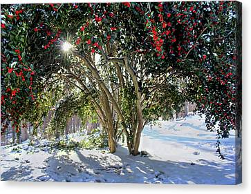 Canvas Print featuring the photograph Winter Holly by Jessica Brawley