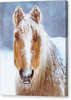 Horse Canvas Print - Winter Horse Portrait by Debi Bishop