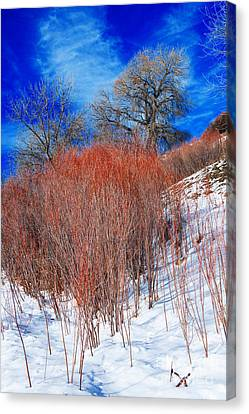 Canvas Print featuring the photograph Winter In Colorado by Michael Moriarty