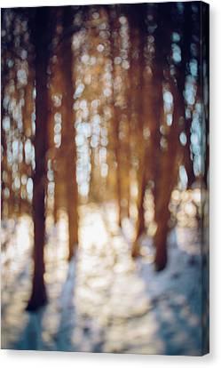 Winter In Snow Canvas Print