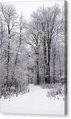 Winter In The Forest Canvas Print by Gabriela Insuratelu