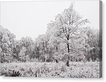 Winter Landscape Canvas Print by Gabor Pozsgai