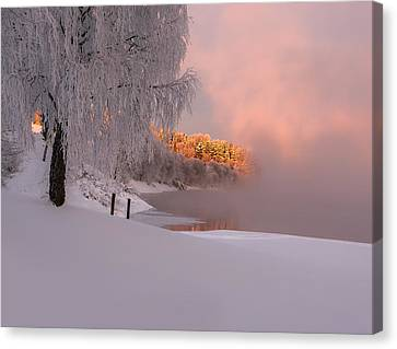 Winter Light Canvas Print by Rose-Maries Pictures