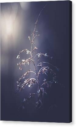 Winter Light Canvas Print by Shane Holsclaw