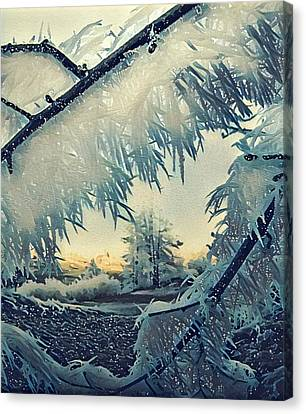 Winter Magic Canvas Print by Colette V Hera Guggenheim