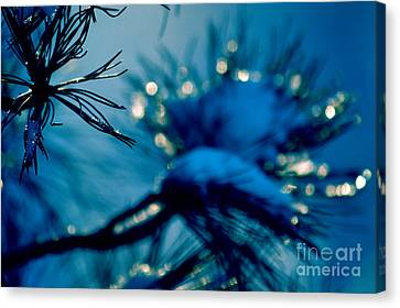 Canvas Print featuring the photograph Winter Magic by Susanne Van Hulst