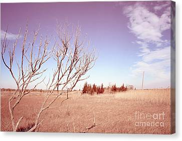 Canvas Print featuring the photograph Winter Marshlands by Colleen Kammerer