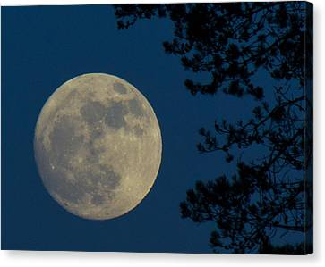 Winter Moon Canvas Print by Randy Hall