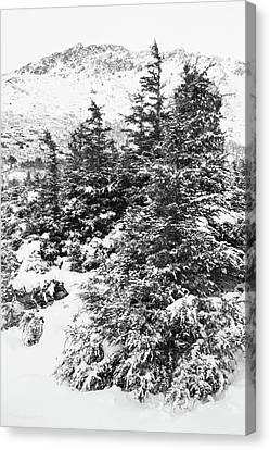 Winter Night Forest M Canvas Print