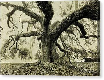 Winter Oak Canvas Print by Scott Pellegrin