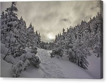 Winter On The Ammo Trail Canvas Print