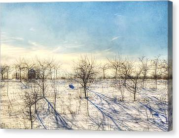 Winter Orchard - Vermont Farm Canvas Print by Joann Vitali