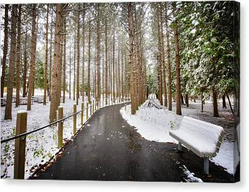 Winter Path At Retzer Nature Center  Canvas Print by Jennifer Rondinelli Reilly - Fine Art Photography