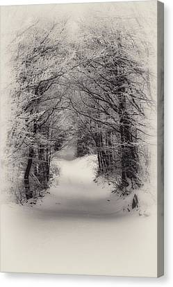 Winter Path Canvas Print