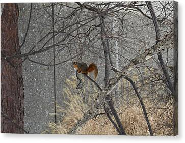 Winter Preparation  Canvas Print