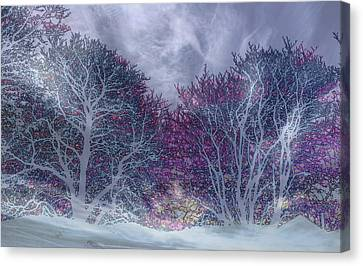 Canvas Print featuring the photograph Winter Purple by Nareeta Martin