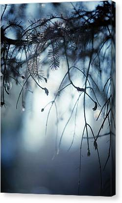 Canvas Print featuring the photograph Winter by Rebecca Cozart